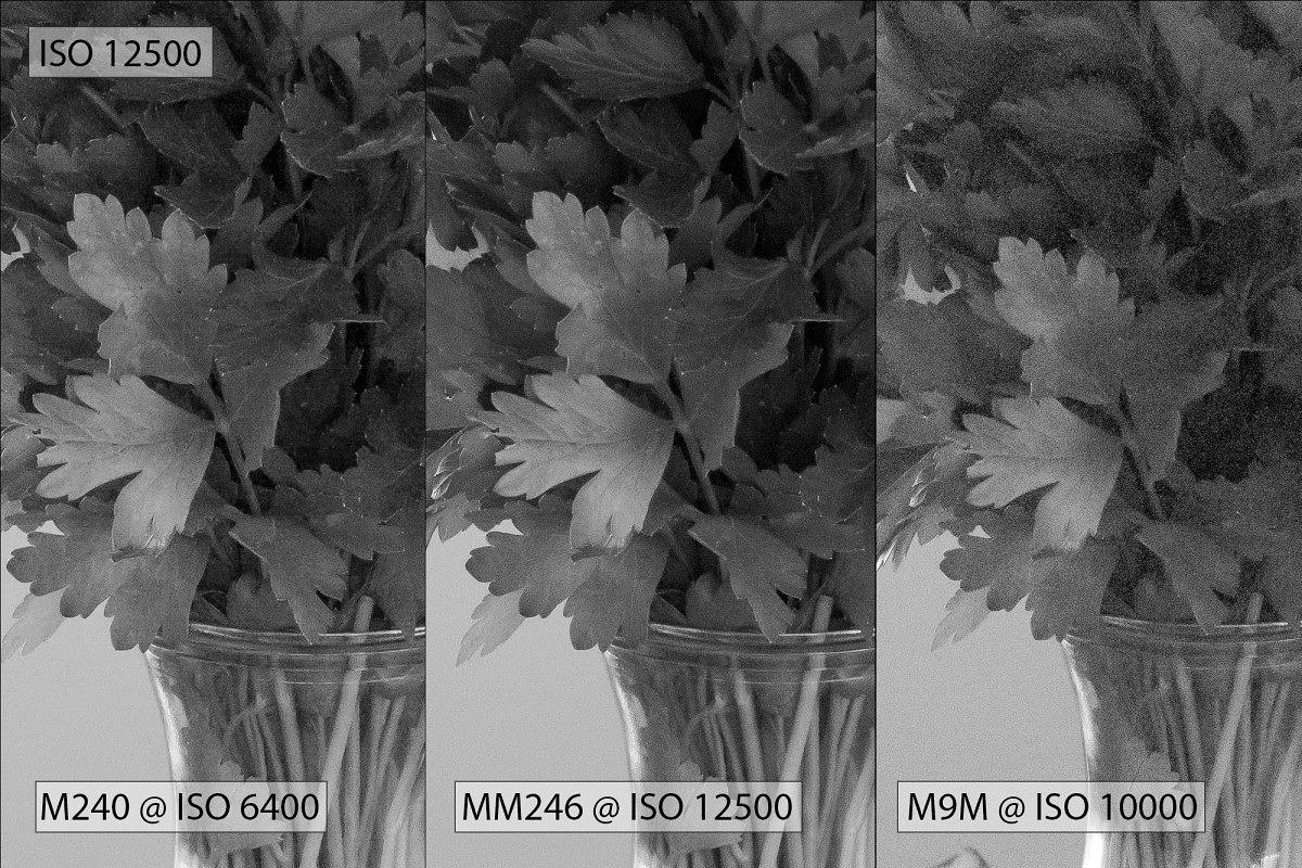ISO 12500 - parsley