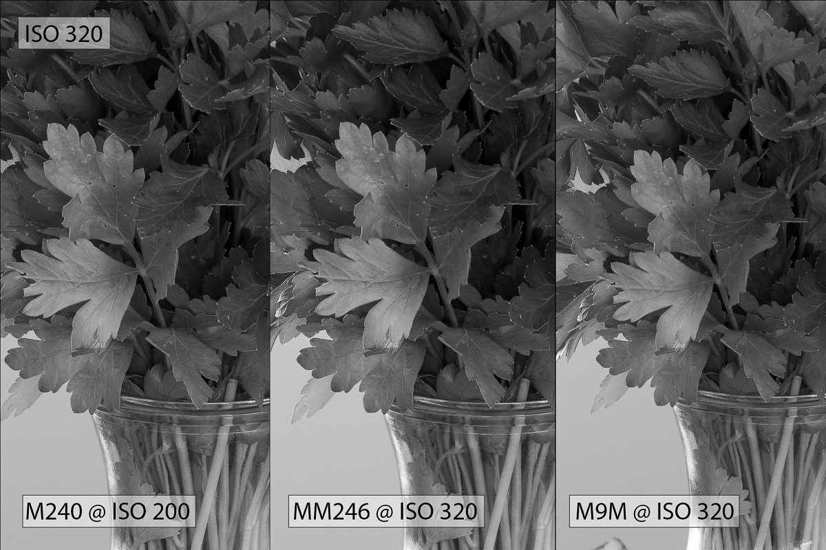 ISO 320 - parsley (w200)