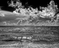 BW-964 {D9863} Seascape