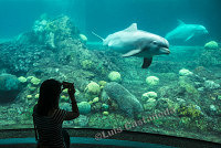 D10110 Aquarium
