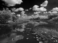 BW-944 The Everglades