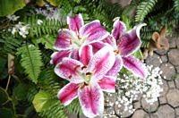 Yard Flower