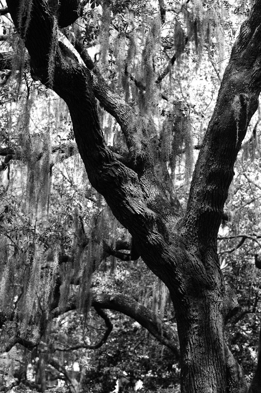 LHSA Savannah 2010-1138