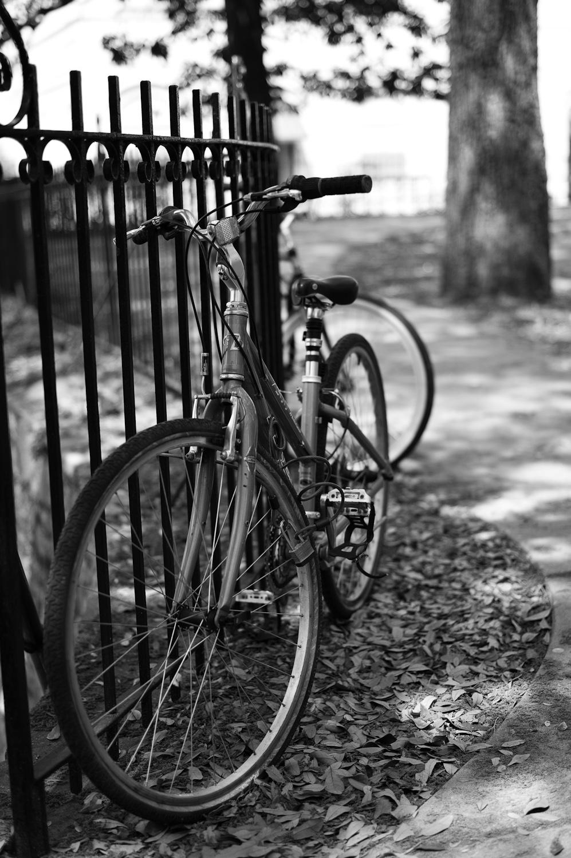 LHSA Savannah 2010-1416