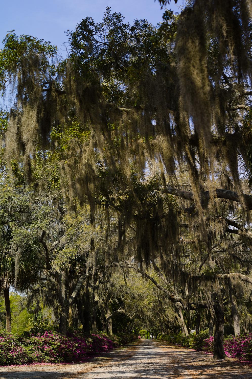 LHSA Savannah 2010-1550