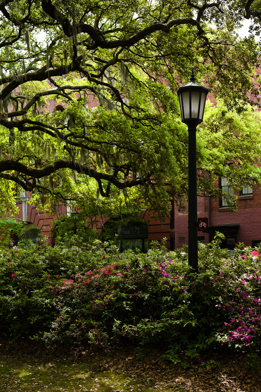 LHSA Savannah 2010-1595