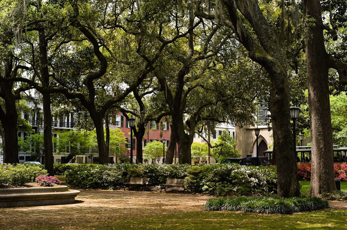 LHSA Savannah 2010-1604