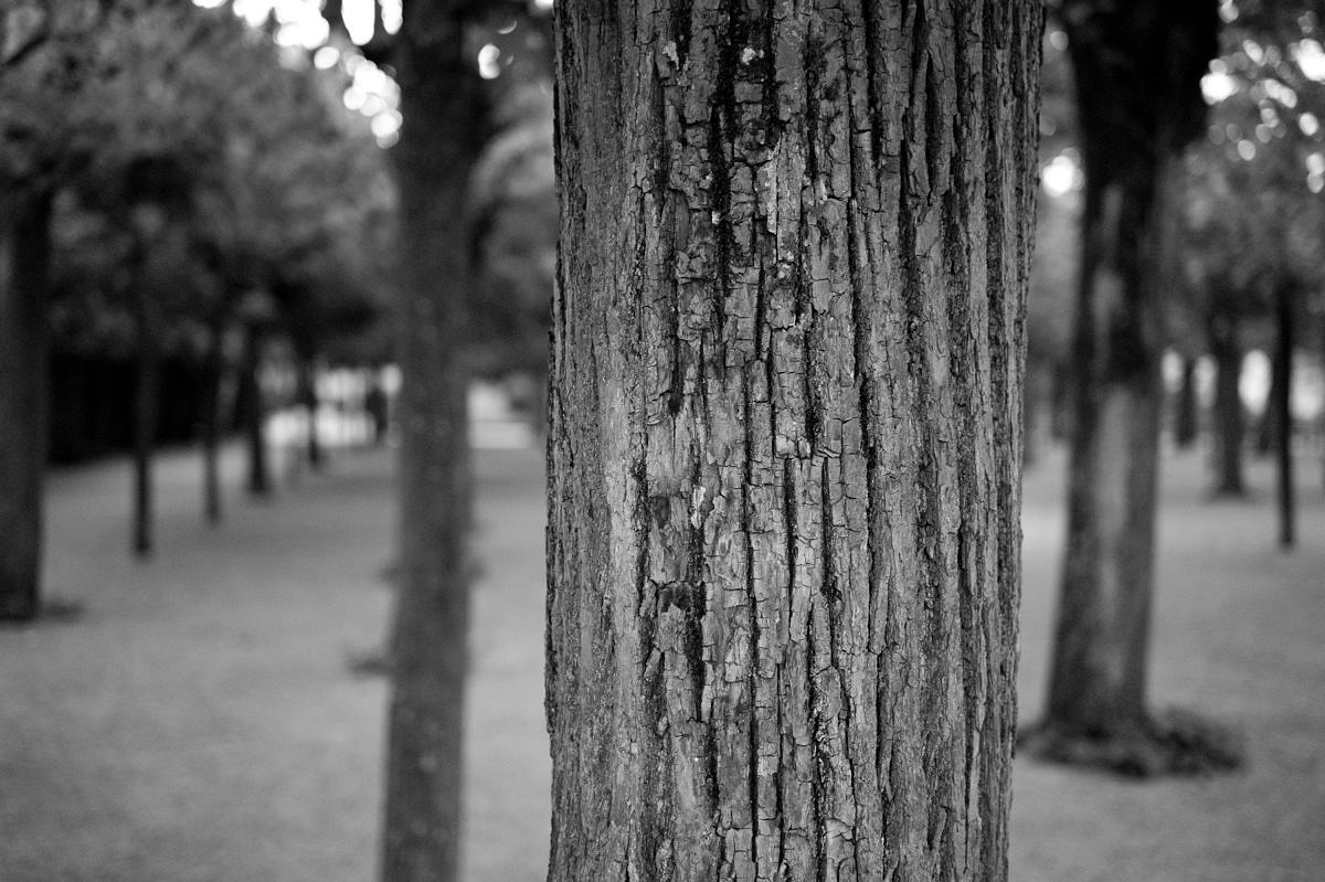 M Monochrom with 50mm APO-Summicron, 1/125th @ f/2, ISO 5000 Click here for 100% Crop