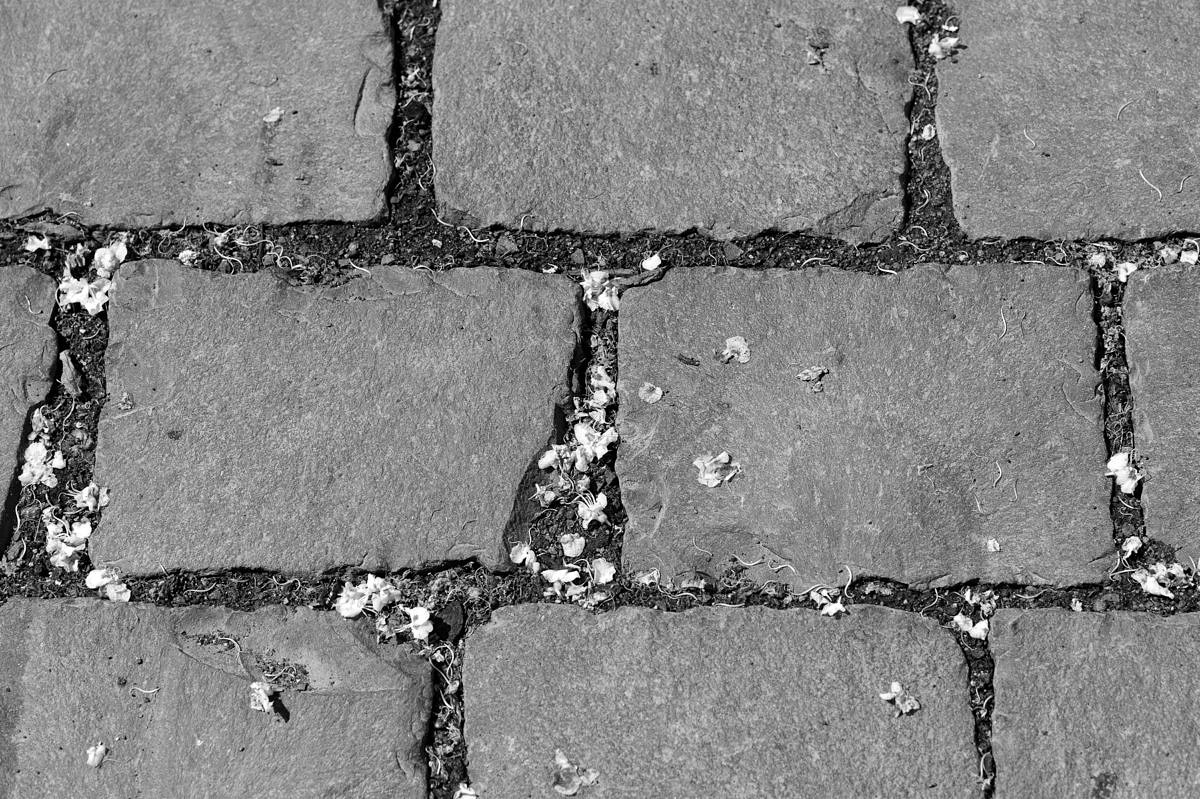M Monochrom with 90mm Elmarit, 1/1500th @ f/5.6, ISO 320Click here for 100% Crop