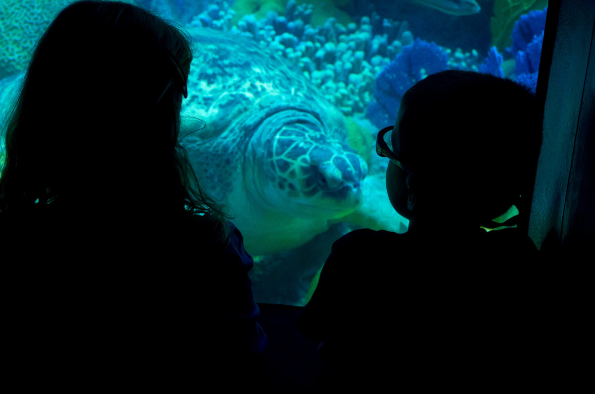 Sophia and Ezra check out a huge sea turtle Leica X Vario (Typ 107), 28-70mm @ 70mm, 1/125th @ f/6.4, ISO 1600