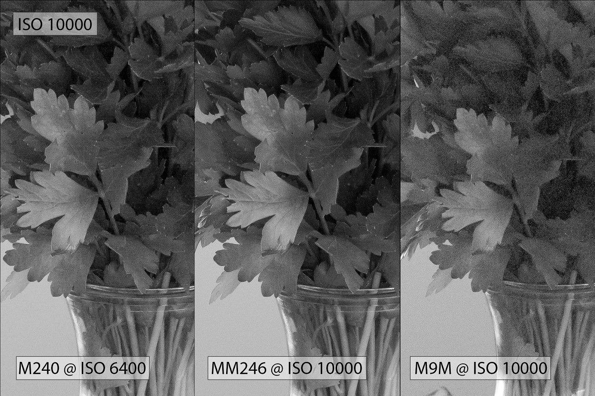 ISO 10000 - parsley (2)
