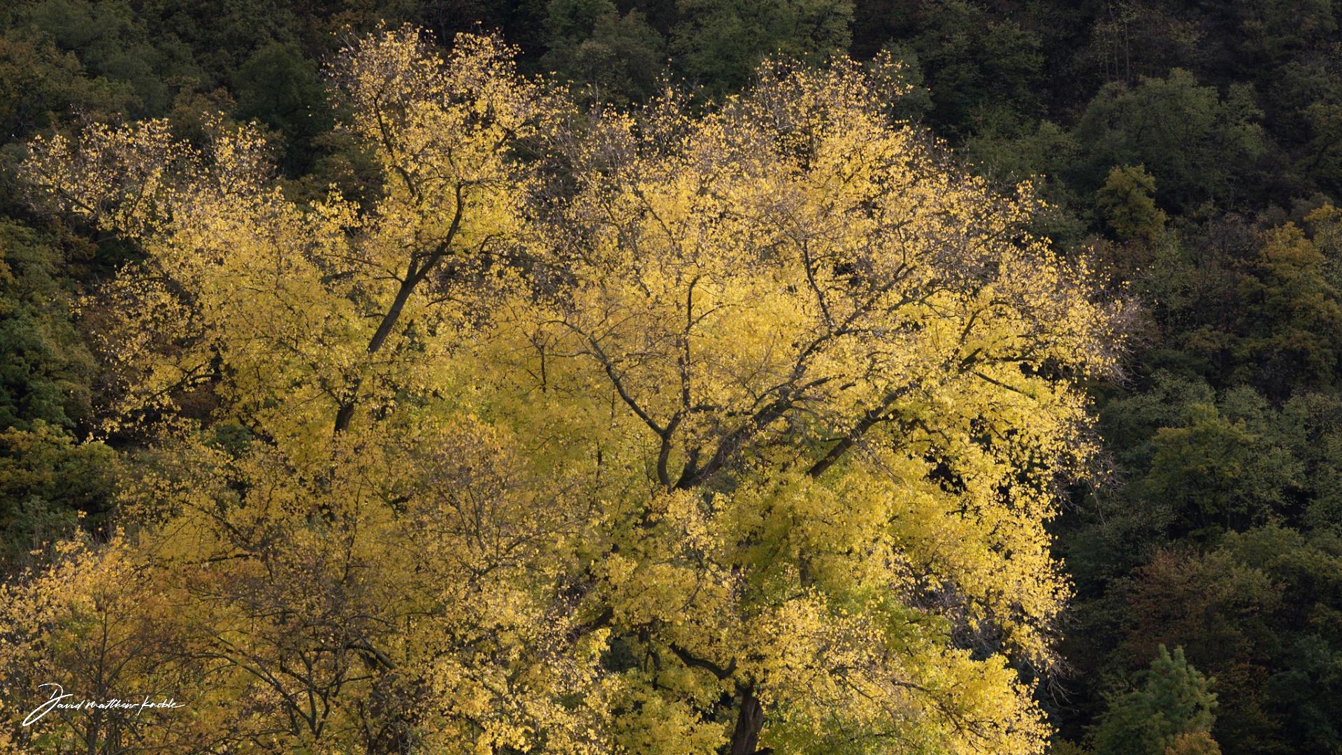 fall-on-the-rhine