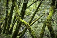 2016-12-25-mossy-bay-trees-dmap