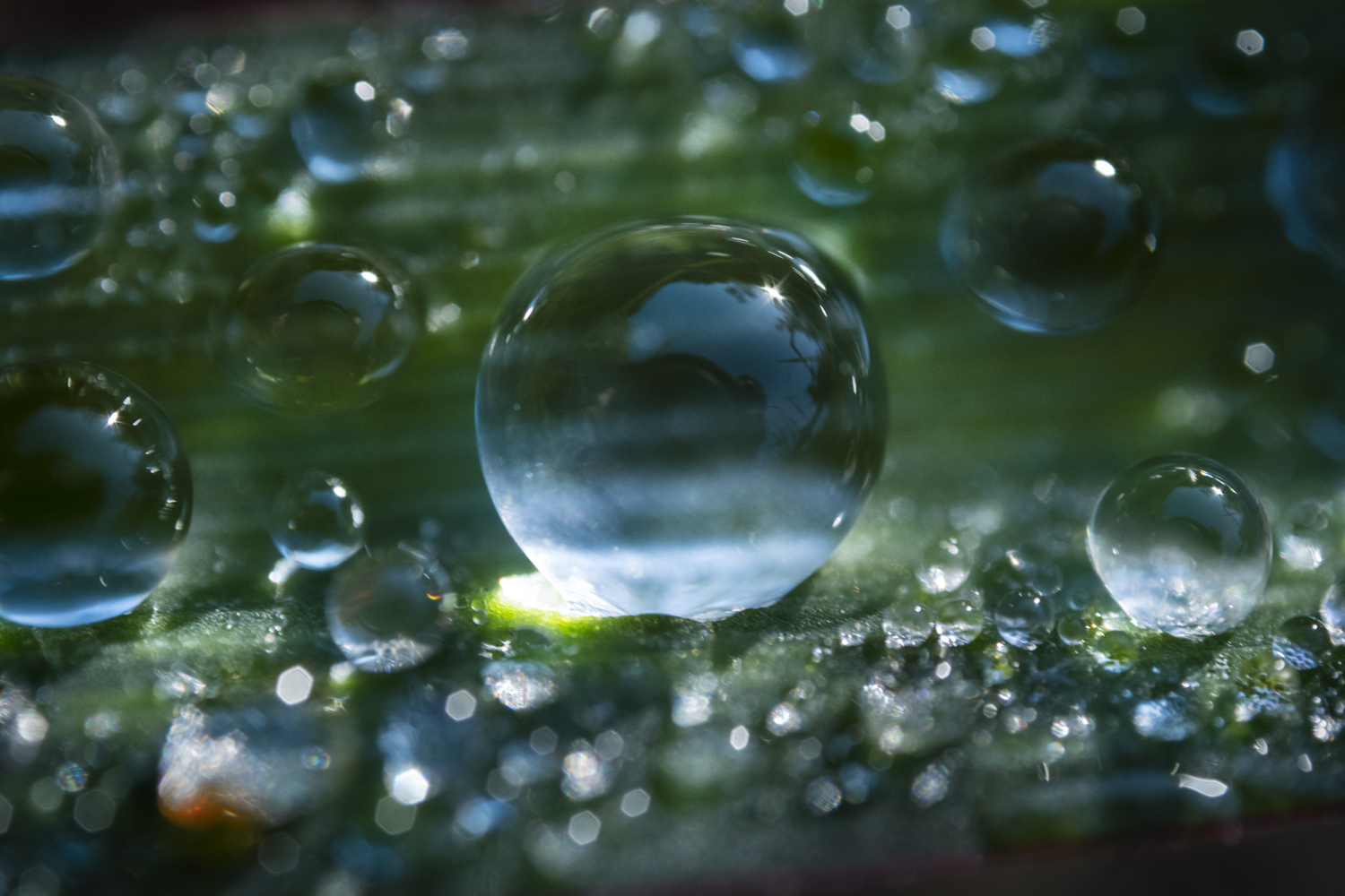 dew-on-grass-central-drop